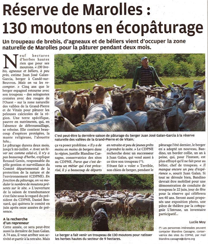 écopaturage-réserve-nationale-grand-Pierre-Vitain- paturages-moutons-solognote-Marolles
